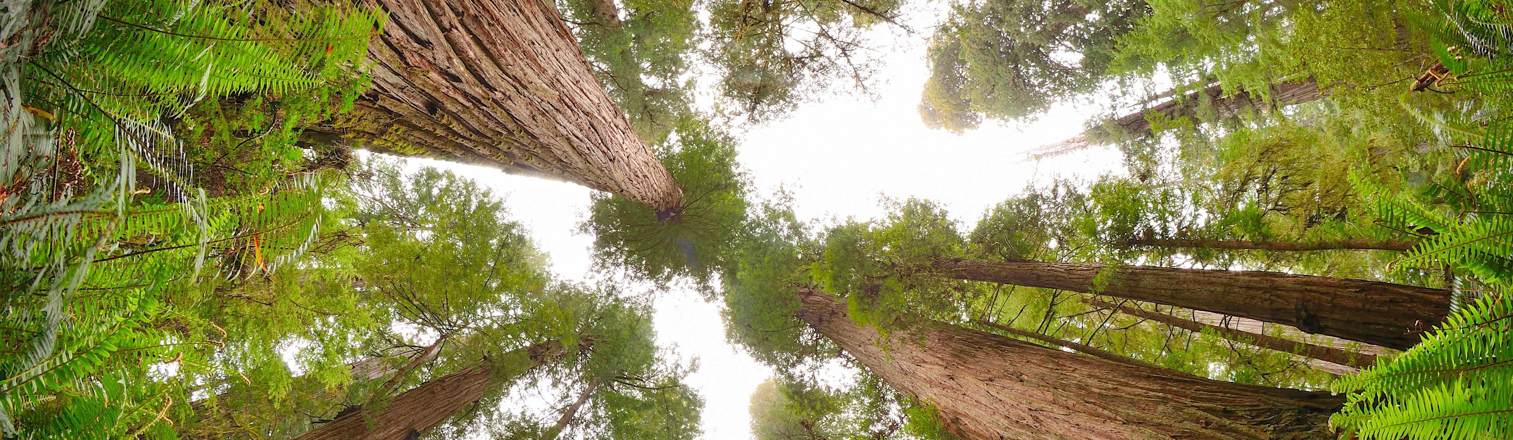 Redwood National and State Parks (U S  National Park Service)
