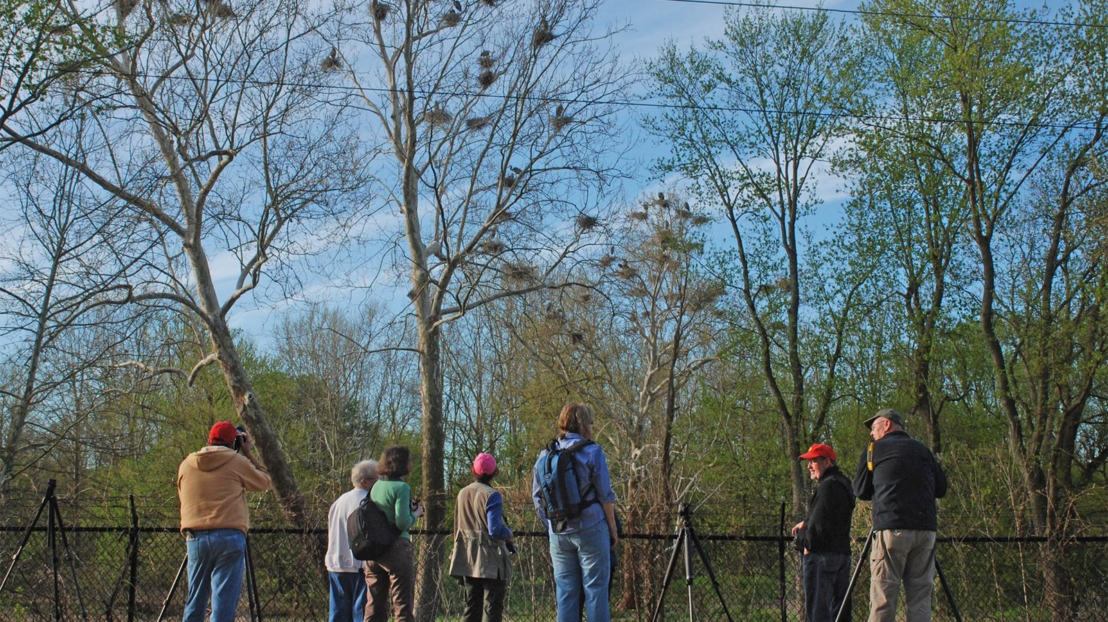 Wildlife watchers stand along Bath Road as they observe the heronry there.