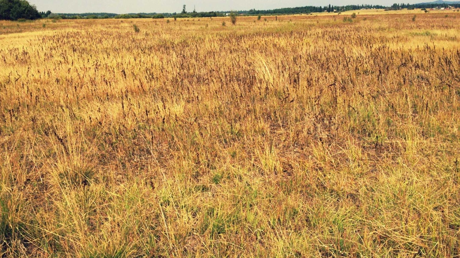 Yellow, brown and green prairie grasses