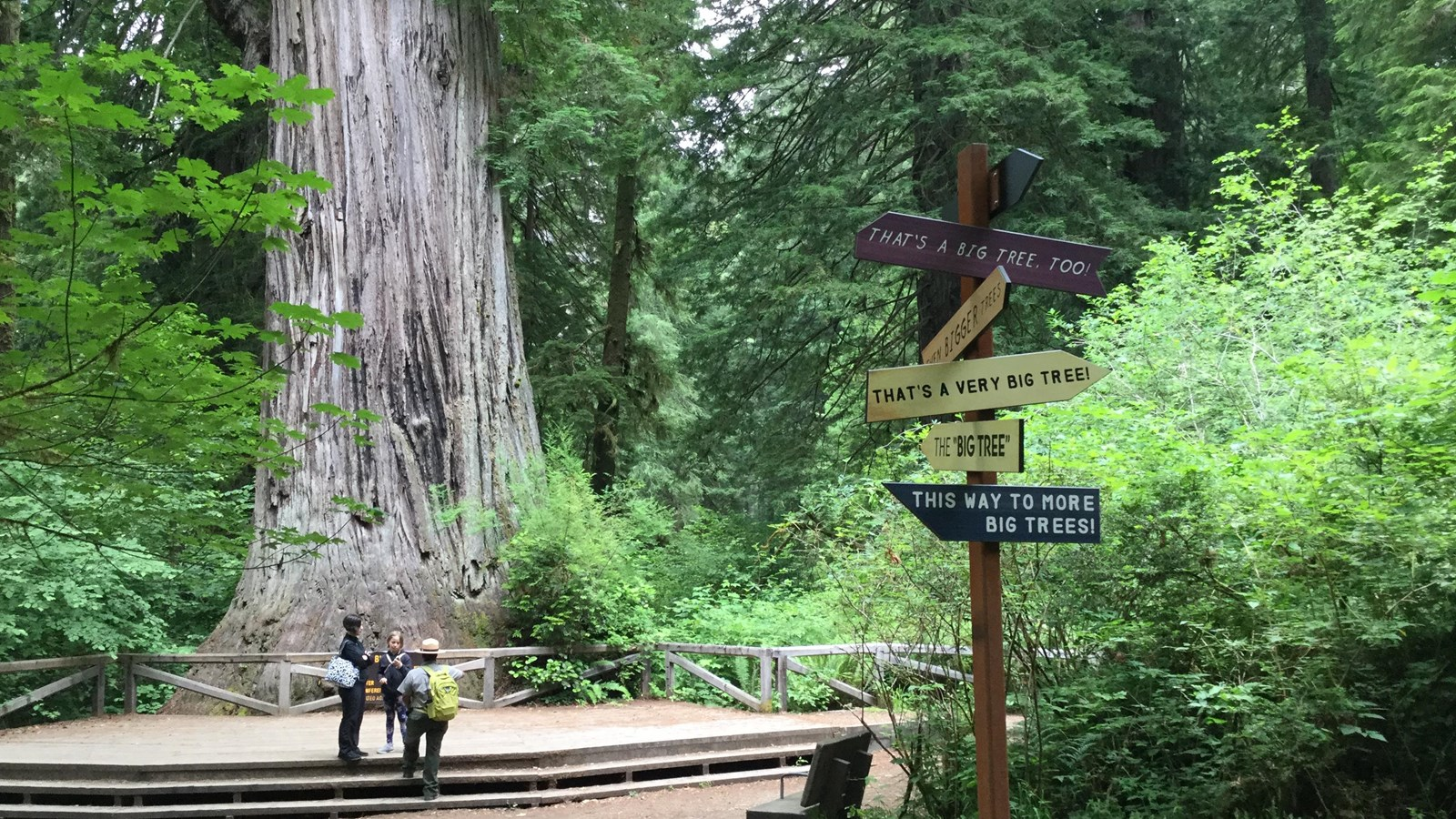 People stand next to redwood tree and a viewing deck. Orientation signs in the foreground.