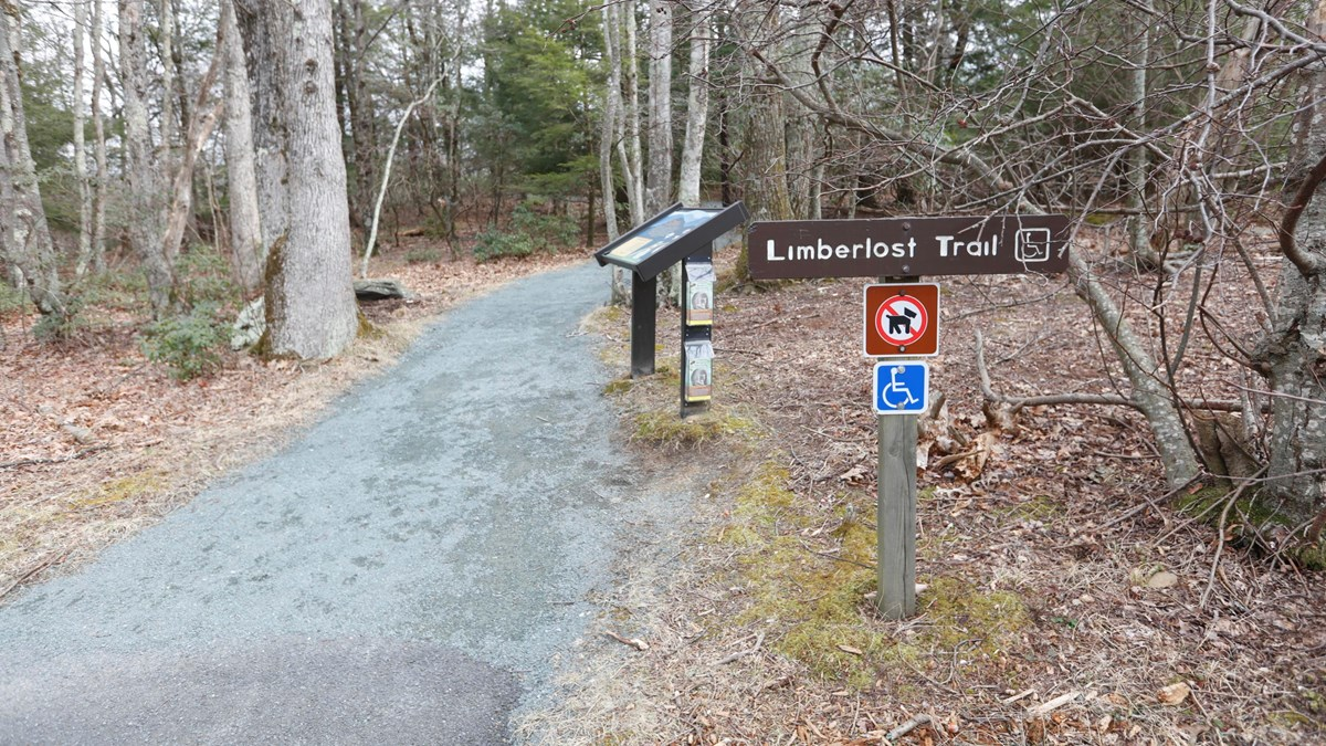 A gravel trail leads into the forest, past several educational signs
