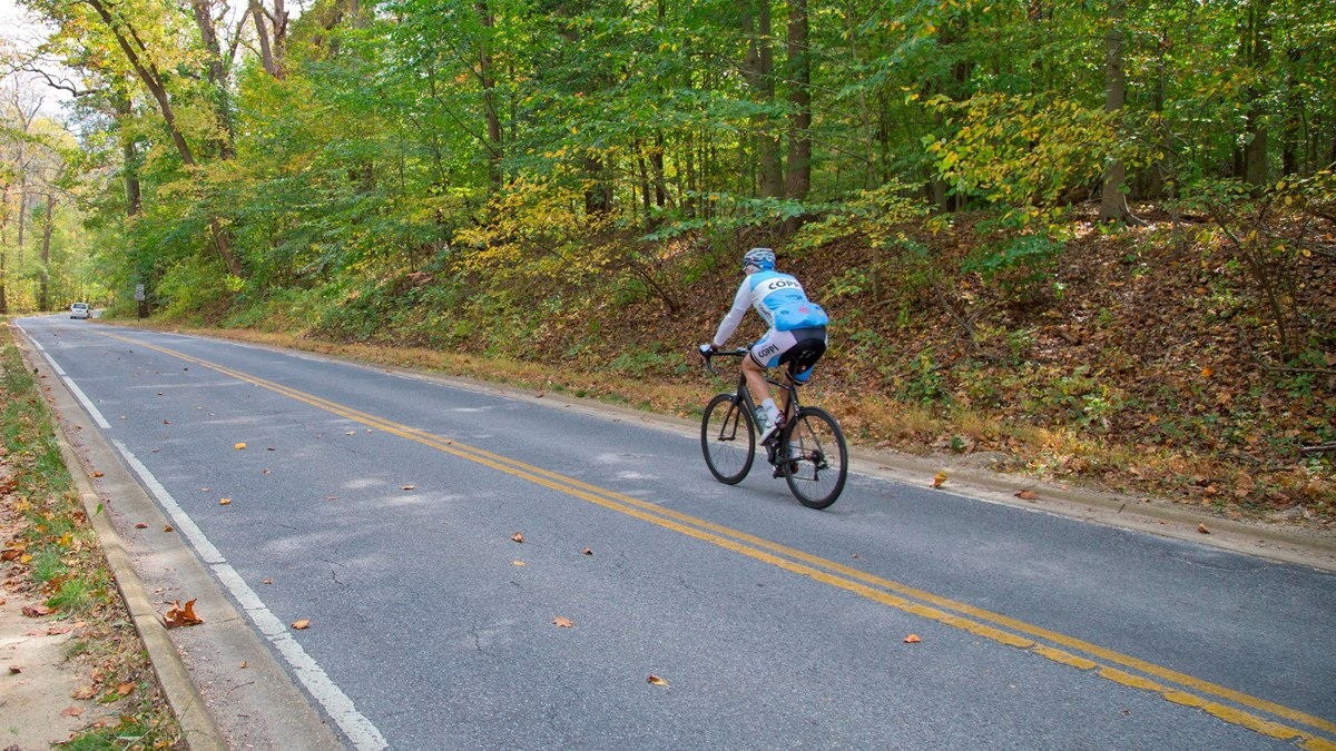 A bicyclist in a blue jersey rides a bicycle on a paved roadway.  Green leafy trees grow by the road