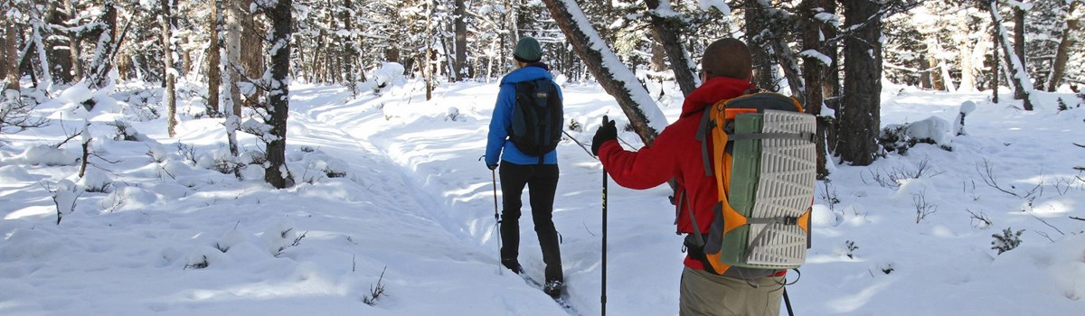 Two skiers make their way on a slight incline through a lodgepole pine forest.