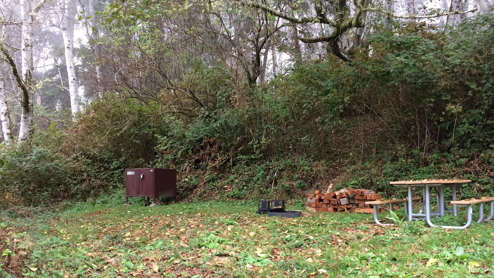 A brown bearproof box, a pile of wood and picnic table next to brush and trees.