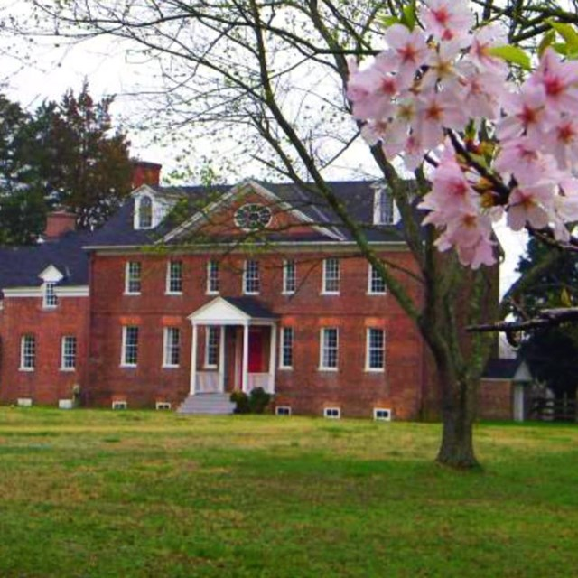 Cherry blossoms bloom at Harmony Hall.