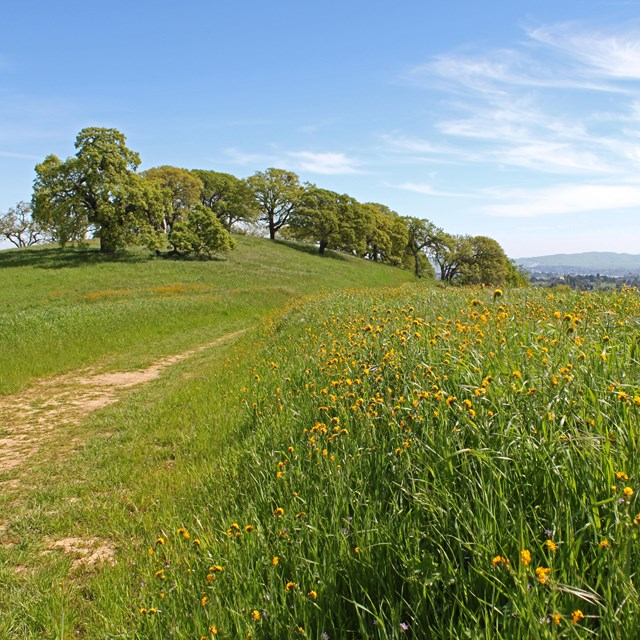 Photograph of the Mount Wanda hills. Green grass and trail.