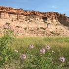 Purple flowers, green grasses, and red striped butte under blue sky.