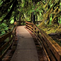 a wooden boardwalk in a dense, mossy rainforest
