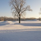 Snow blanketing mounds surrounded by trees