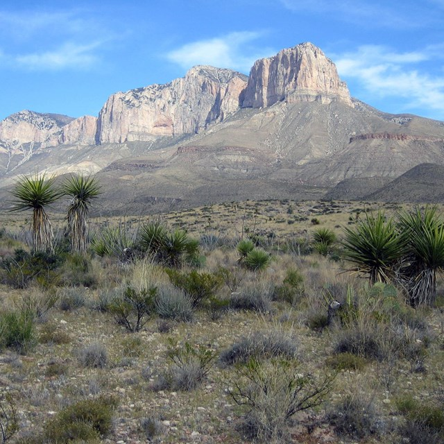 Limestone cliff rising high over desert landscape