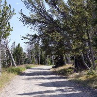 Gray, gravel road ascends through an open alpine forest.