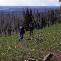 Hikers along a tan, bare ground trail through an alpine meadow.