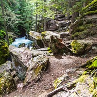 Rocky trail along creek in dense mossy forest