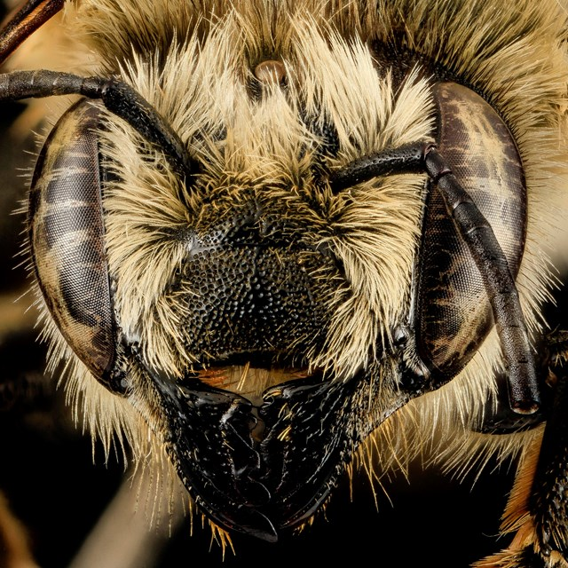 A close up photo of a bee