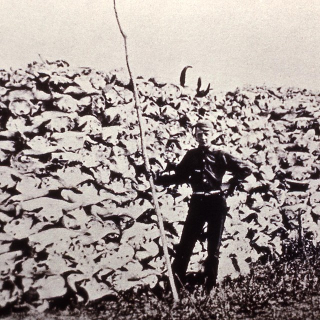 Historic image of man standing in front of enormous pile of bison skulls
