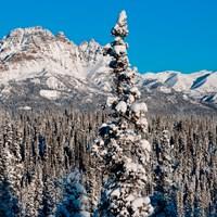 Winter Activities - Denali National Park & Preserve (U S