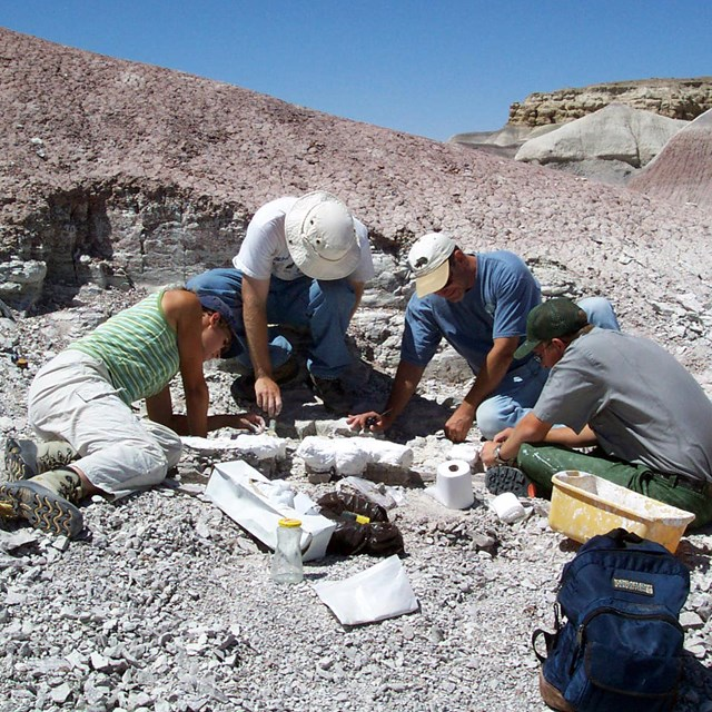 People work around a dig for fossil bones in gray badlands with a blue sky.