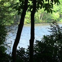 view of river through forested bank