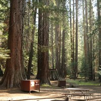 A campfire ring, picnic table, and bear box are in a clearing under Sequoia trees