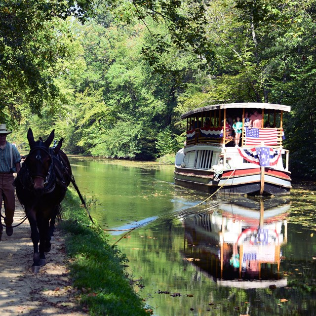 Mules pull canal boat through the water.