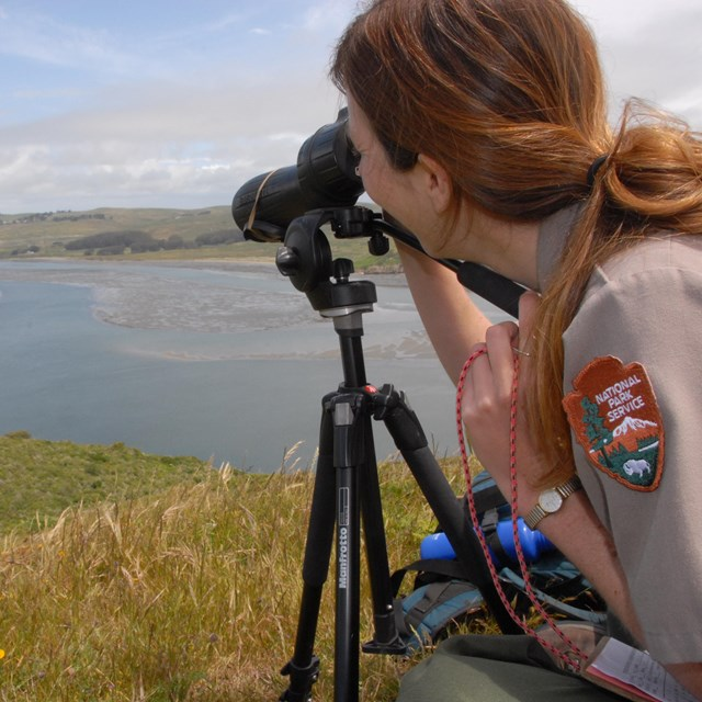 Park biologist looking through spotting scope at harbor seals in the distance