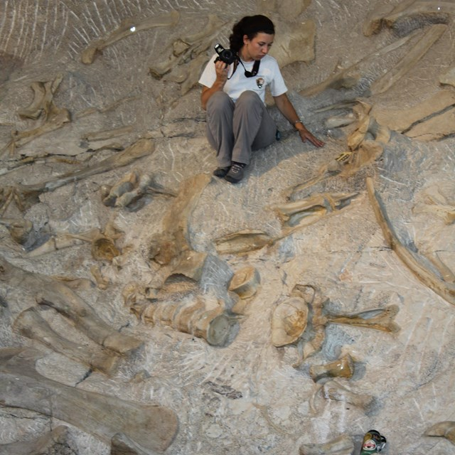 A woman photographs dinosaur bones