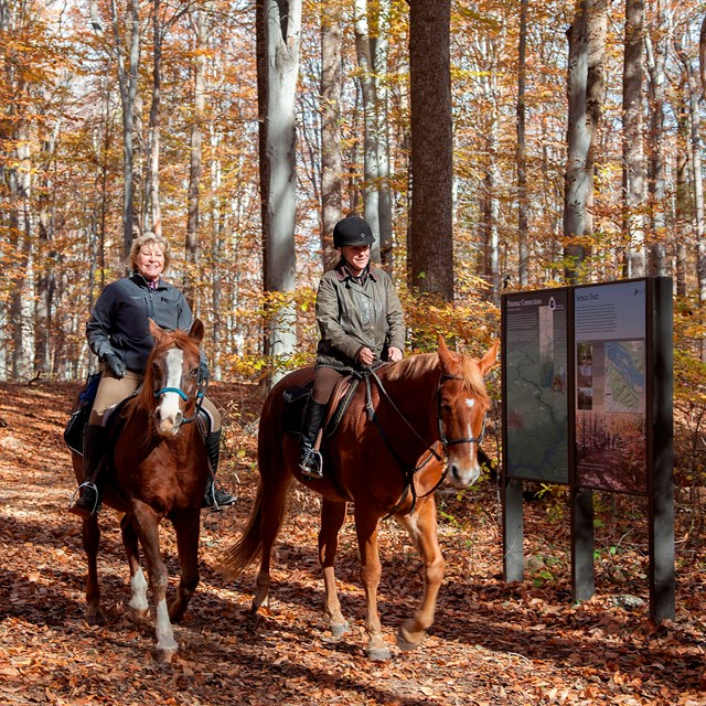Equestrians ride through the fall foliage.
