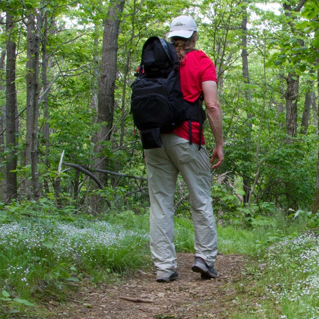 Man hiking on a trail through a grassy forest