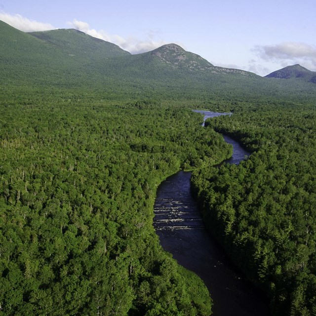 Aerial view of clear river running through evergreen forest toward mountains