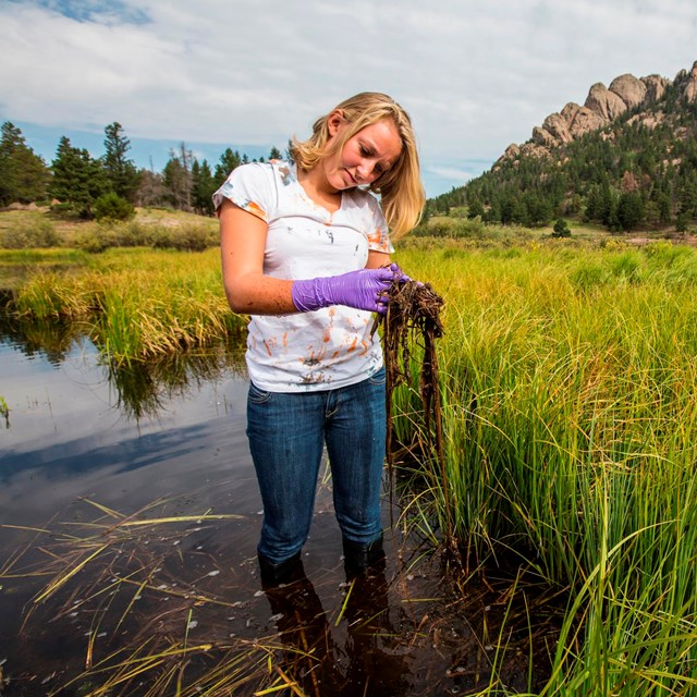 Citizen scientist sampling in Rocky Mountain National Park.