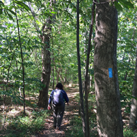 hiker on a natural surface trail though mixed-age trees