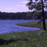 Grassy shore in front of a blue lake, with conifer trees in the distance.