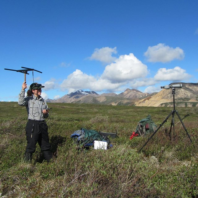 Park staff gathering data in mountain landscape