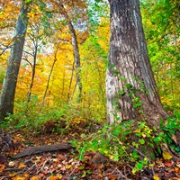Trees turn colors in Autumn at Rock Creek Park