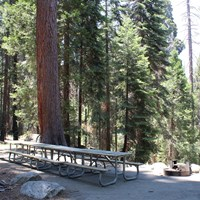 A long picnic table sits under trees next to a campfire ring with grill