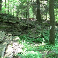 a rock outcropping in a deciduous forest with ferns along a blazed footpath
