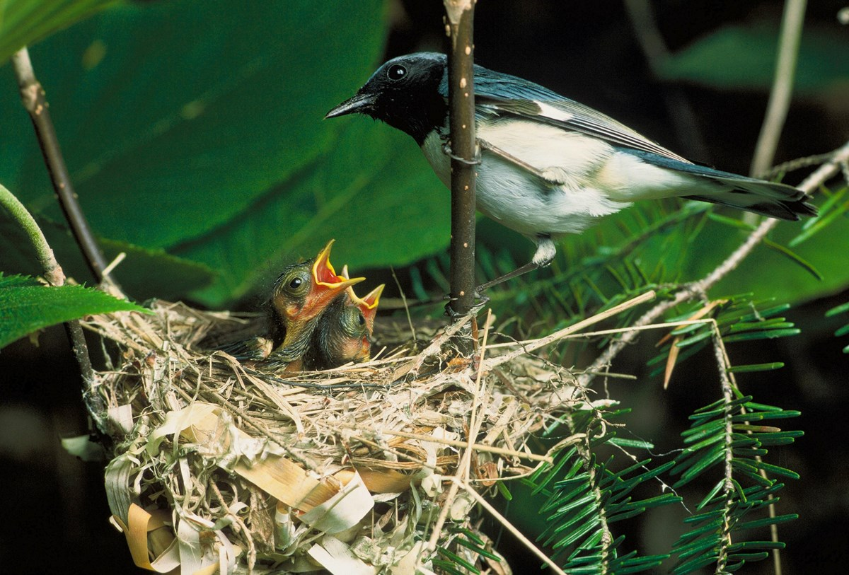 Bird with nest and babies