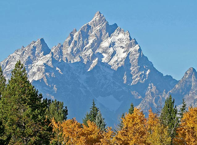 Grand Teton with aspen trees in fall.