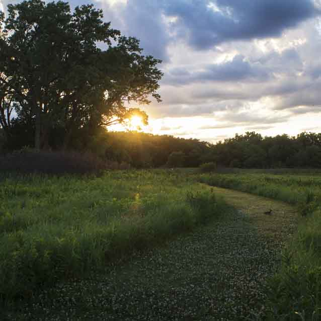 A rabbit sits on a prairie trail at sunset with a woodland in the background.