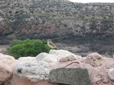 A small bird stands on a masonry wall