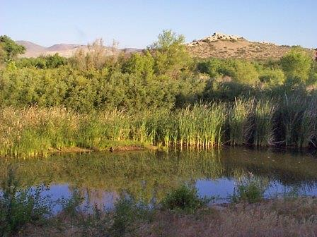 Water reflects surounding cattails, with a hill and pueblo in the background