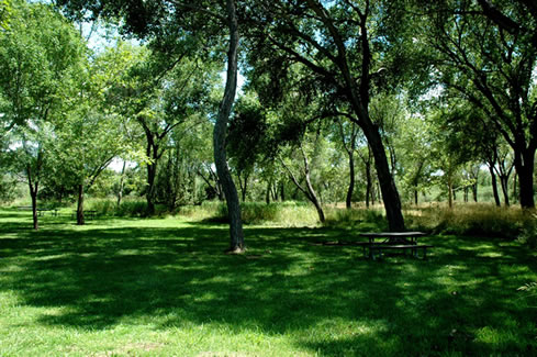 A grassy area with tall trees.