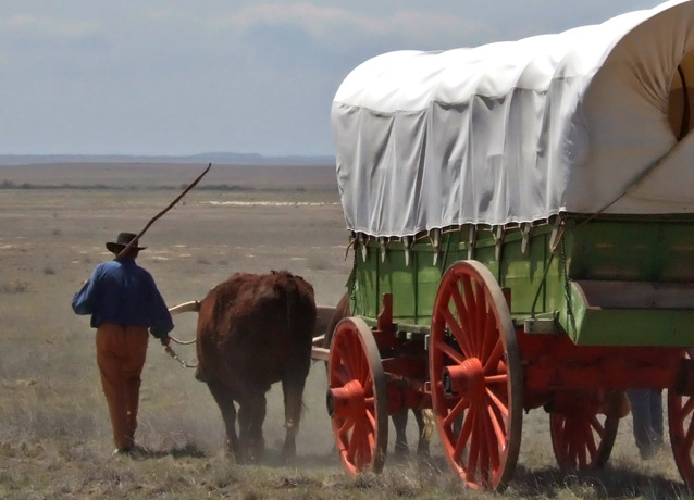 oxen pulls a covered green wagon with red wooden wheels, a man with a stick walks beside the wagon