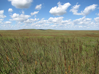 wide open prairie grasses and endless skies