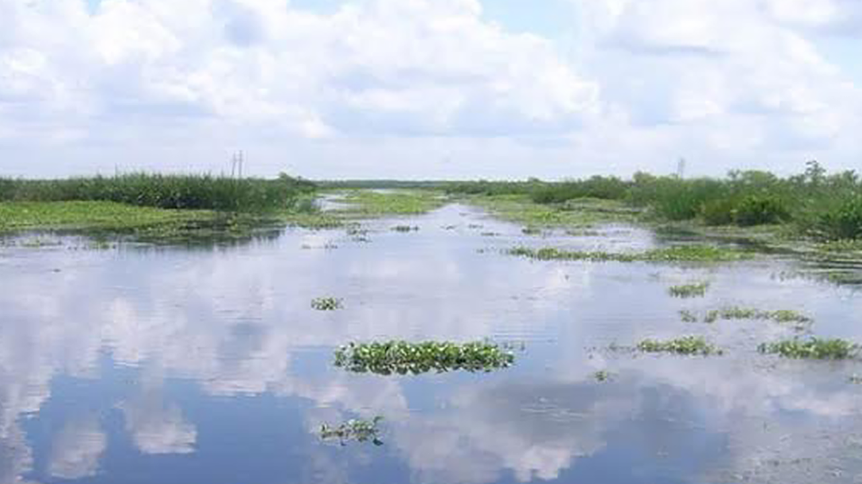 Marsh land in Jean Lafitte National Historic Park and Preserve