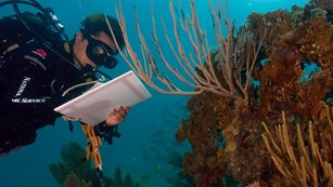 Biologist taking notes underwater, in scuba gear, observing coral