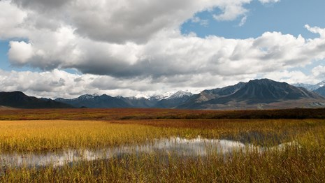 View looking out at wetlands in Denali National Park.