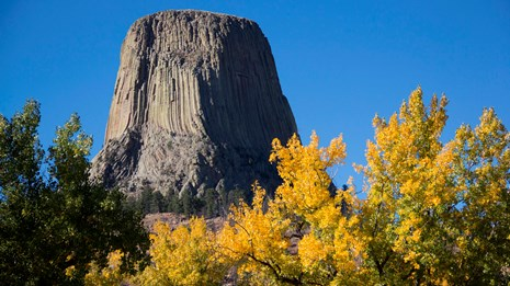 Photo of Devils Tower with columnar basalt, and fall yellow aspen in foreground.