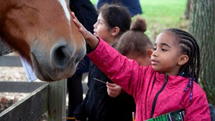A girl pets a horse's nose