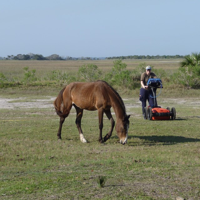 Archeologist standing in background behind a horse during Geophysical Survey